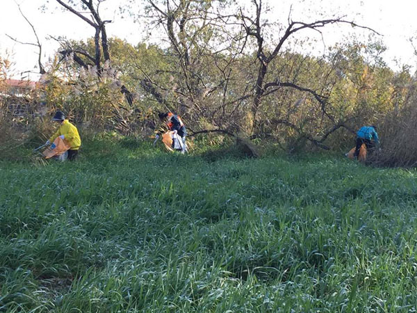 元荒川河川敷の清掃作業2