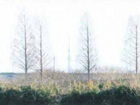 葉を落としたメタセコイアとスカイツリー
