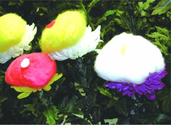 菊の着せ綿