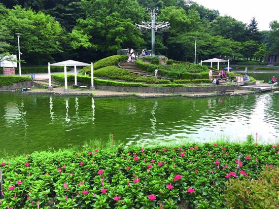 ハイビスカスの咲く池のほとり