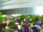 世界盆栽大会